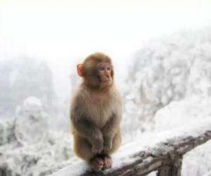 ZJJ Guests Adored Cute Monkeys in Snow-Covered Huangshi Village
