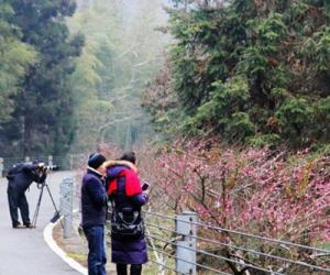 The Guests Favoring Plum Blossoms and Snow in ZJJ Huangshi Village