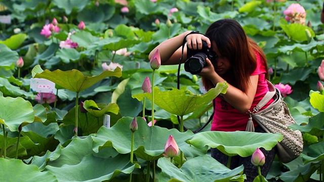 Hunan Lotus Flower Route For Changsha-Yueyang-Xiangtan-Changde-Loudi