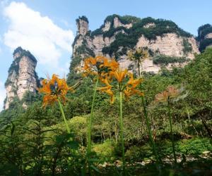 Zhangjiajie Bana flower is competing in full bloom in early autumn