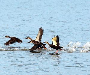 Birdwatching in Changde