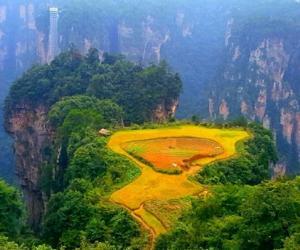 Zhangjiajie held harvest festival in Wulingyuan core scenic spot