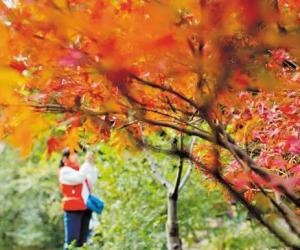 11th Changsha Yuelu Mountain Red Maple Festival