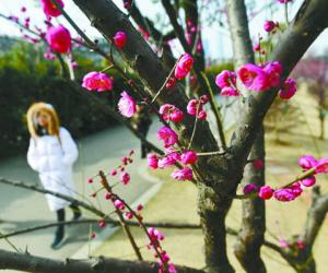 "Flowers Blossom at Day of ""Lichun"""