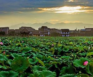 Appreciating Lotus Flowers in Hunan