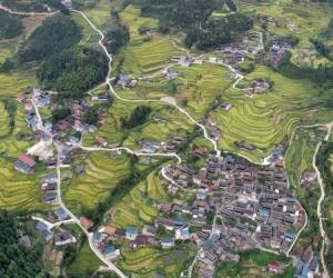 Ariel View of Hongjiang Paddy Fields