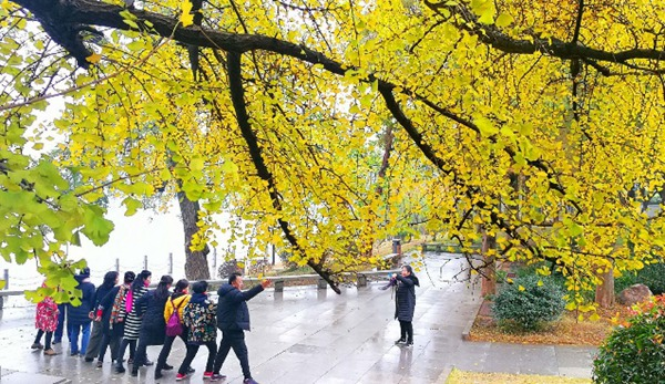 Changsha Enters Best Time to View Colorful Leaves